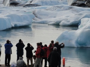 jokulasarlon lagoon ice bergs seals nature ice group