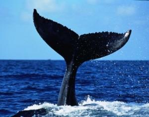 Whale.fin