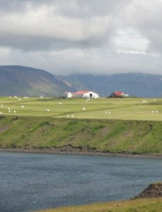 food-westfjords-farm-near-halla