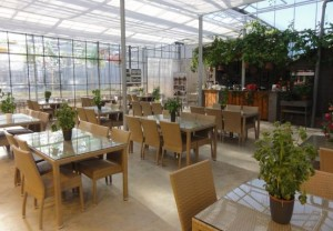 Cafe.in.Fridheimar.greenhouse